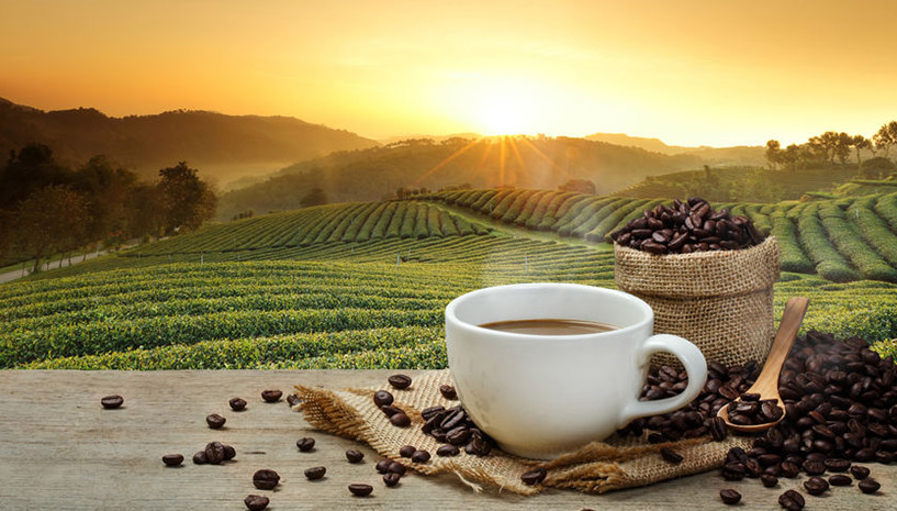 Grüne Kaffeebohne und Gicht