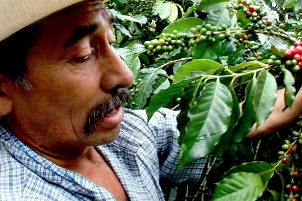 kaffeebauer_guatemala